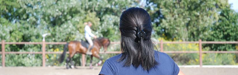 Stage d'équitation de travail