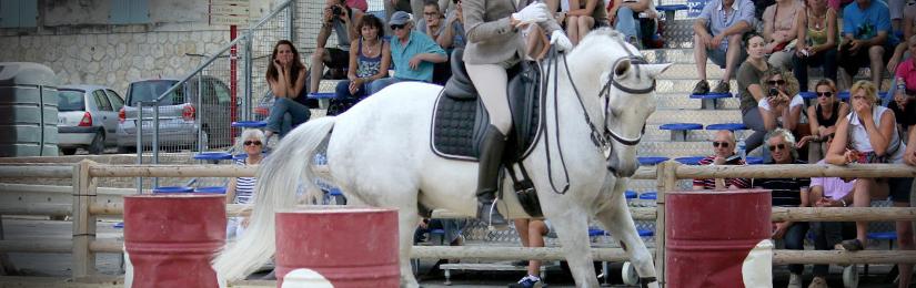 Stage d'équitation de travail le 12 octobre