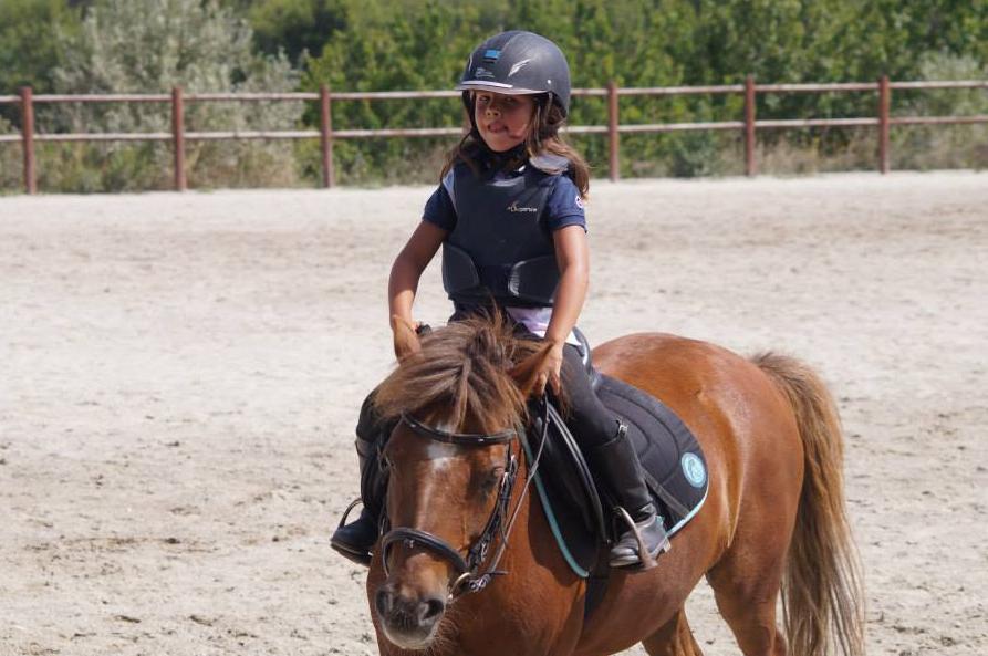 Travail & accompagnement jeunes chevaux